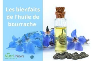 Image article bourrache